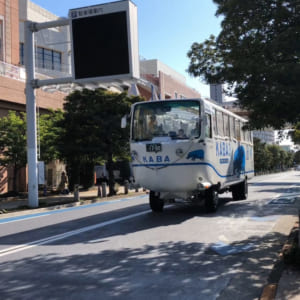 Tokyo no Kaba(Daiba)